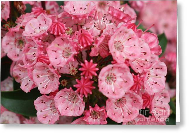 Pretty In Pink Greeting Card by Amy Holmes