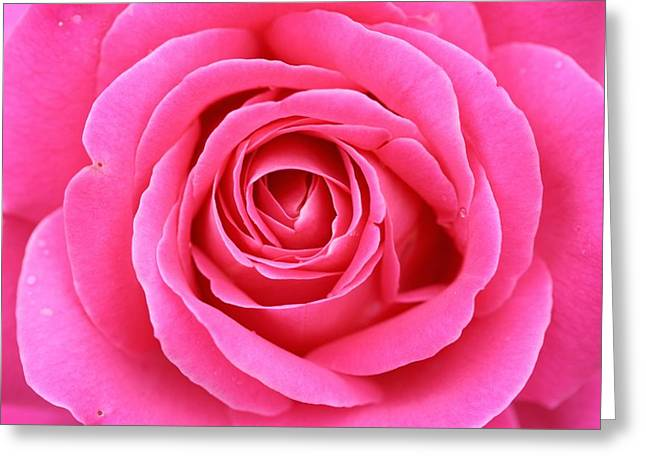 Pretty In Pink Greeting Card by Betsy LaMere