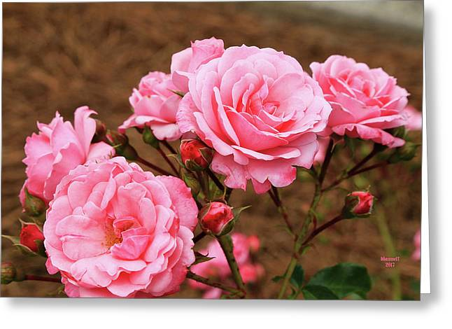 Pretty In Pink Greeting Card by Dennis Baswell
