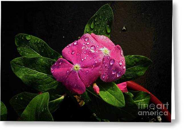 Greeting Card featuring the photograph Pretty In Pink by Douglas Stucky