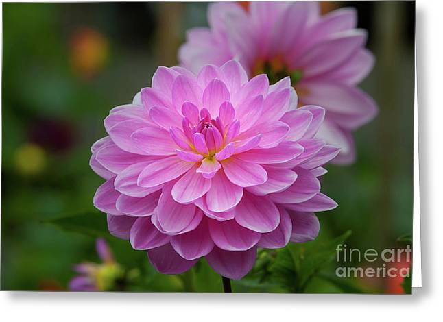 Pretty In Pink 1 Greeting Card