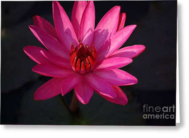 Pretty In Pink Greeting Card by John S