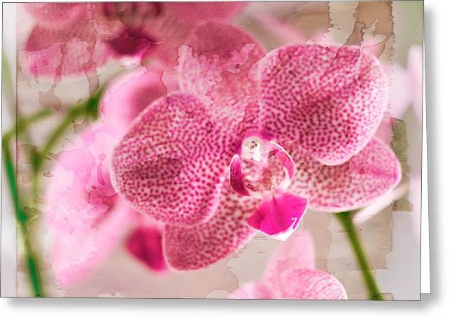 Pretty In Pink Greeting Card by Pamela Ellis
