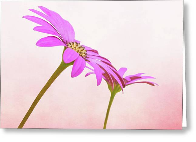 Pretty In Pink Greeting Card by Roy McPeak
