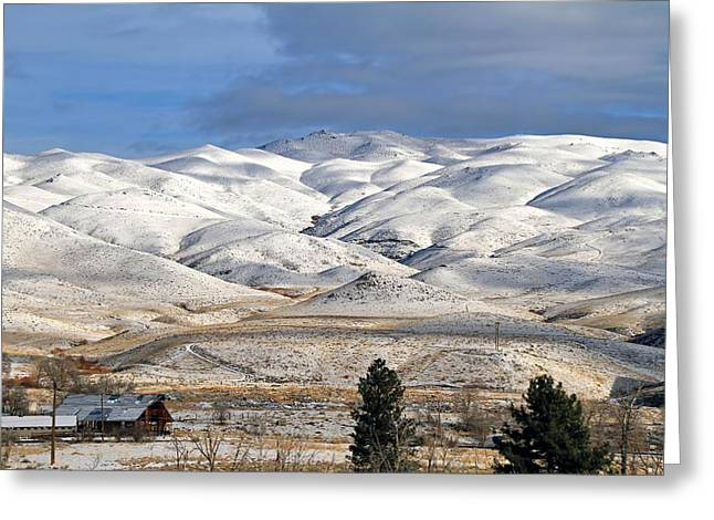 Greeting Card featuring the photograph Pretty In White by Donna Kennedy