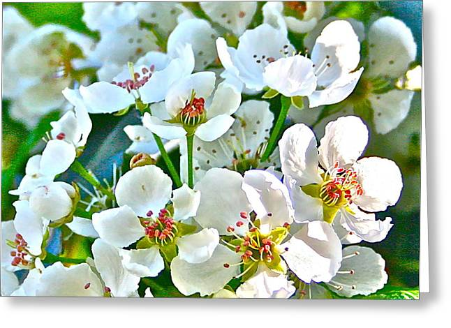Pretty In White Greeting Card by Gwyn Newcombe