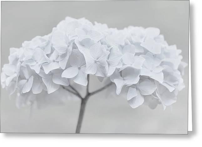 Pretty In White Hydrangea Flowers Greeting Card