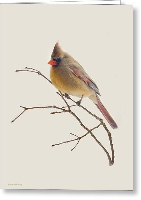 Ron Jones Greeting Cards - Pretty Lady Greeting Card by Ron Jones
