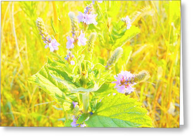 Pretty Lilac Greeting Card