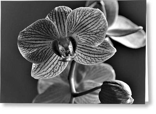 Greeting Card featuring the photograph Pretty Orchid Bw by Jeremy Hayden