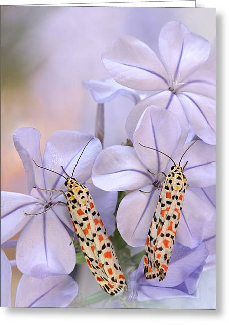 Pretty Pair Greeting Card by Jimmy Hoffman