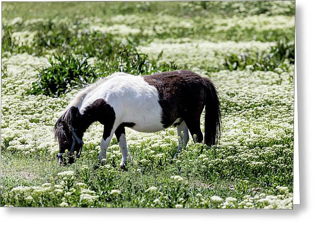 Pretty Painted Pony Greeting Card by James BO Insogna
