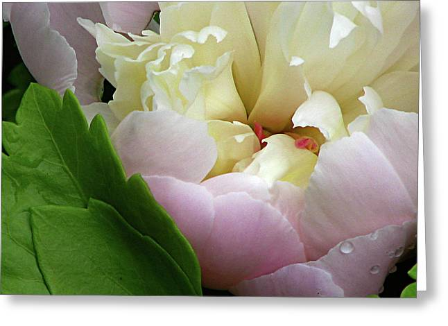 Greeting Card featuring the photograph Pretty Petals by Deborah Johnson