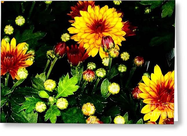 Pretty Petals Greeting Card by Marsha Heiken