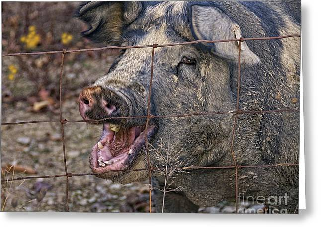 Pretty Pig Greeting Card by Timothy Flanigan and Debbie Flanigan at Nature Exposure