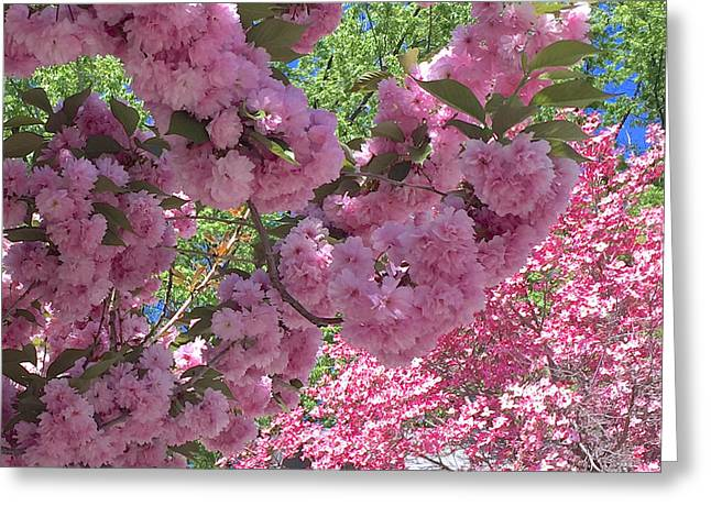 Pretty Pink Blossoms Greeting Card by Carol Groenen