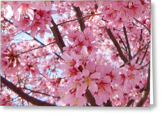 Pretty Pink Cherry Blossom Tree Greeting Card