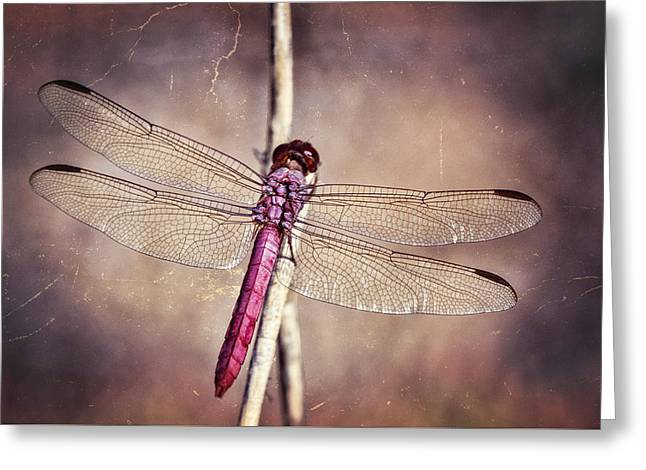 Pretty Pink Dragonfly  Greeting Card