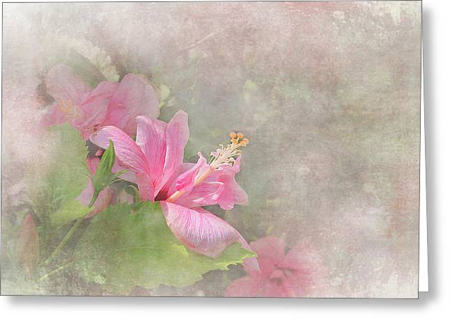 Pretty Pink Hibiscus Greeting Card