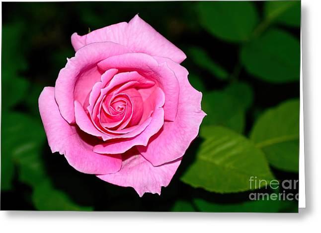 Pretty Pink Rose By Kaye Menner Greeting Card