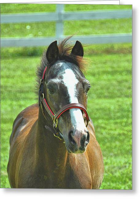 Greeting Card featuring the photograph Pretty Pony by Dressage Design