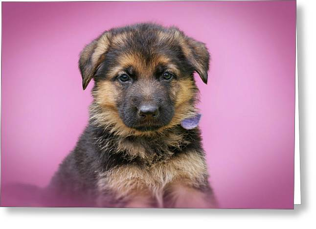 Pretty Puppy In Pink Greeting Card