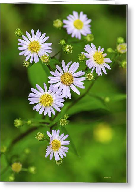 Pretty Purple Aster Flowers Greeting Card by Christina Rollo