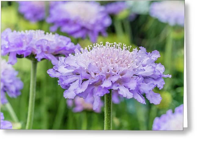 Pretty Purple Greeting Card