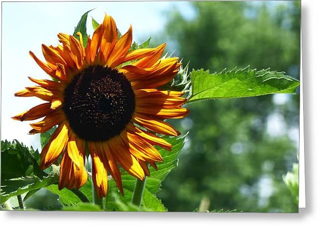 Pretty Sunflower 2015 Greeting Card