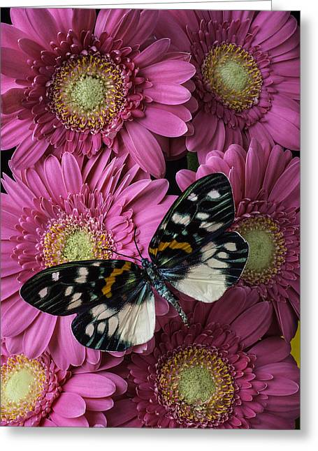 Pretty Wings On Pink Daises Greeting Card by Garry Gay