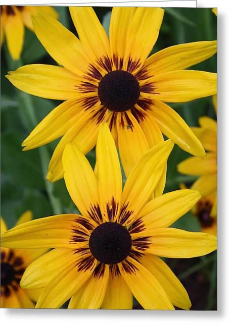 Pretty Yellow Flowers Greeting Card by Maria Young