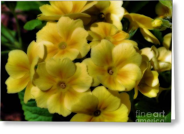 Pretty Yellow Primrose Greeting Card by Smilin Eyes  Treasures