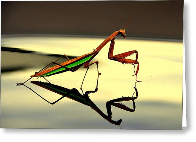 Preying Mantis Greeting Card by Aron Chervin