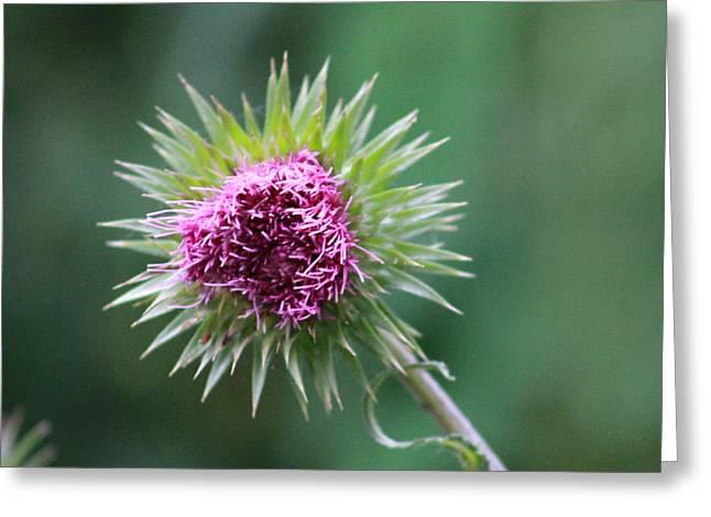 Prickly Flower Greeting Card