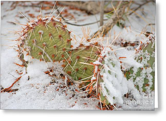 Prickley Pear Cactus Greeting Card by Donna Greene