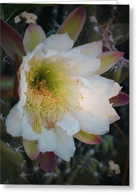 Prickley Pear Cactus Greeting Card