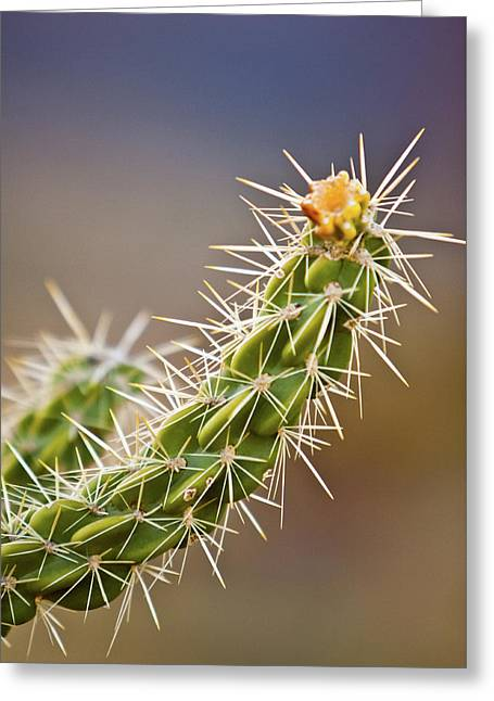 Prickly Branch Greeting Card