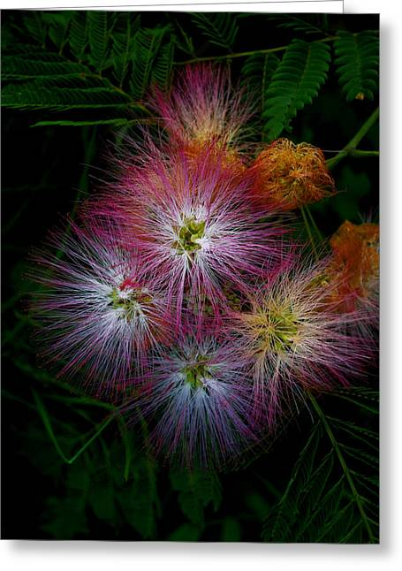 Prickly Flower Greeting Card by Christopher Lugenbeal