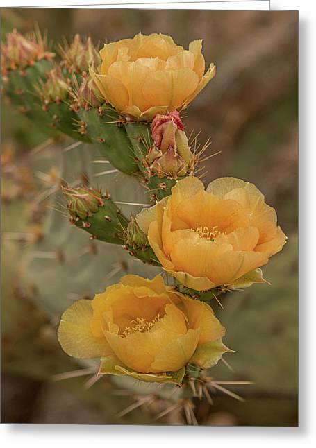 Prickly Pear Blossom Trio Greeting Card