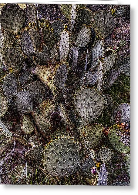 Prickly Pear Cactus At Tonto National Monument Greeting Card