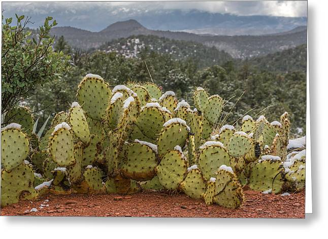 Cactus Country Greeting Card
