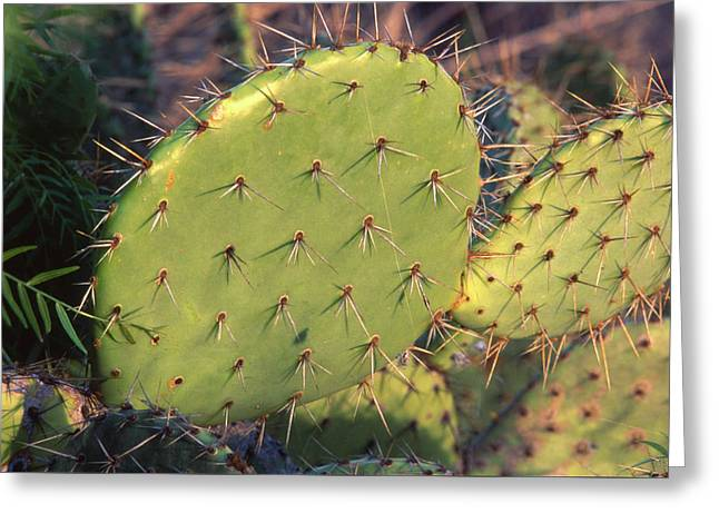 Prickly Pear Cactus Greeting Card by Soli Deo Gloria Wilderness And Wildlife Photography