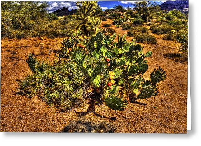 Prickly Pear In Bloom With Brittlebush And Cholla For Company Greeting Card
