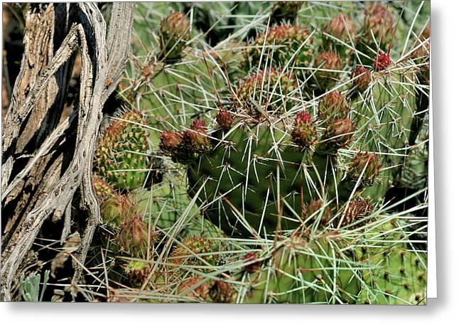 Prickly Pear Revival Greeting Card