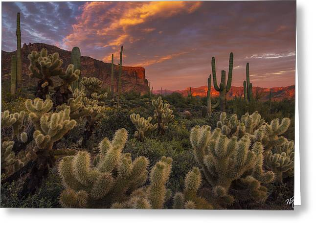 Prickly Pink Peralta Greeting Card by Peter Coskun