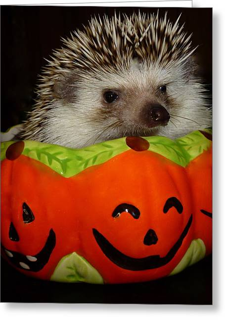 Prickly Pumpkin Greeting Card