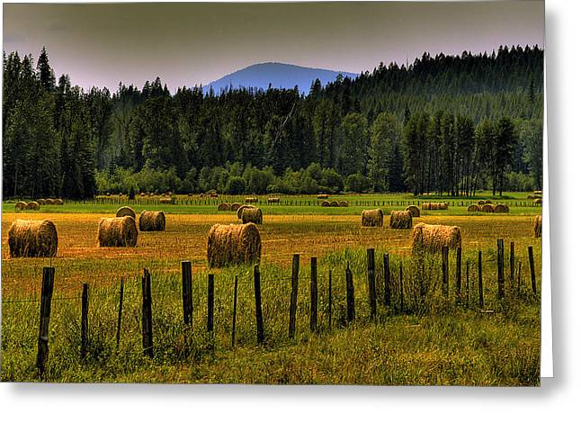 Priest Lake Hay Bales II Greeting Card by David Patterson