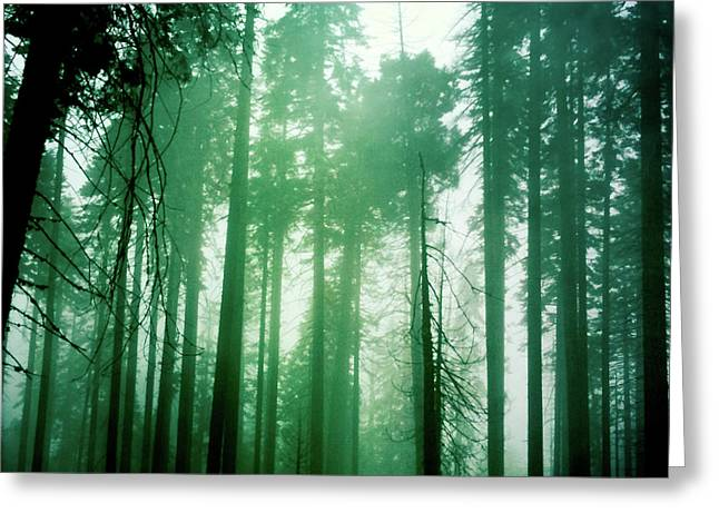 Primeval Forest Greeting Card
