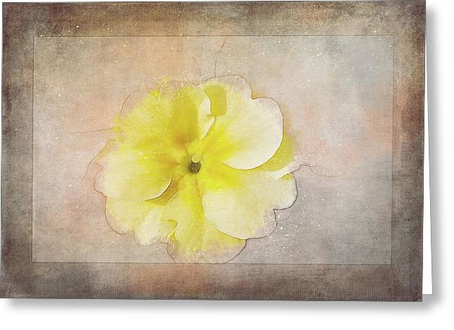 Primrose Etched In Stone Greeting Card