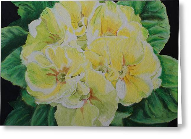 Primroses Greeting Card